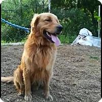 Adopt A Pet :: Redd - Washington, DC