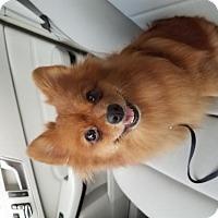 Adopt A Pet :: KIWI (DG) - Tampa, FL