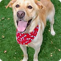 Adopt A Pet :: Charlie - Litchfield Park, AZ