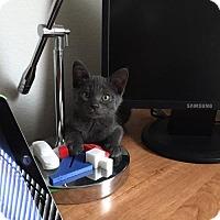 Adopt A Pet :: Jolie - Mission Viejo, CA