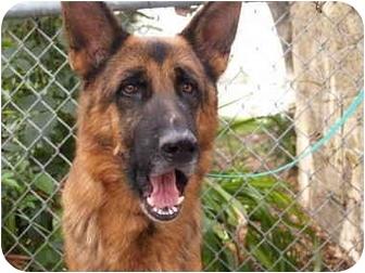 German Shepherd Dog Mix Dog for adoption in El Cajon, California - Fritz