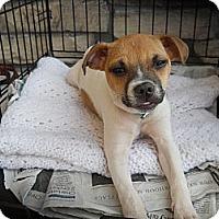 Adopt A Pet :: Buddy - Charlotte, NC