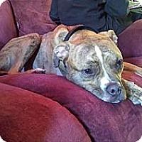 Adopt A Pet :: Levi - Roaring Spring, PA
