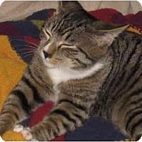 Adopt A Pet :: Woogie - Davis, CA