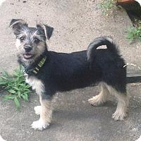 Adopt A Pet :: Ivy - North Little Rock, AR