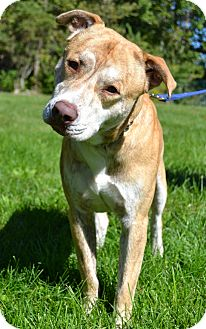 Pit Bull Terrier Mix Dog for adoption in Michigan City, Indiana - Jackson