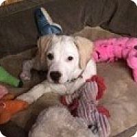 Adopt A Pet :: Millie - Edisto Island, SC