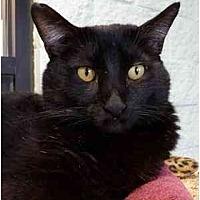 Adopt A Pet :: Astrologer - Grayslake, IL