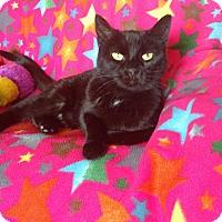 Adopt A Pet :: Naomi - Des Moines, IA