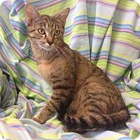 Adopt A Pet :: Fanny - Larned, KS