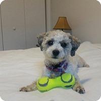 Adopt A Pet :: Daisey - Cedar Rapids, IA