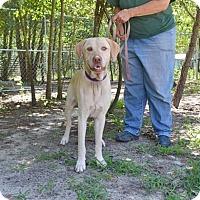 Adopt A Pet :: Uli - Camden, SC