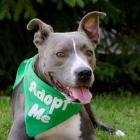Adopt A Pet :: Nora - Itasca, IL