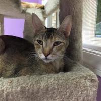 Adopt A Pet :: Neptune - Orleans, VT