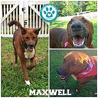 Adopt A Pet :: Maxwell - Kimberton, PA