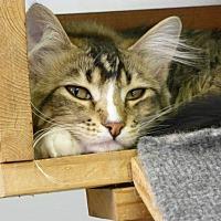 Adopt A Pet :: Dutchess - Quincy, CA