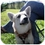Photo 4 - Shepherd (Unknown Type) Mix Puppy for adoption in Wylie, Texas - Sierra