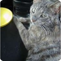 Adopt A Pet :: Journi - Cleveland, OH