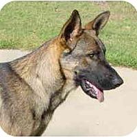 Adopt A Pet :: Coley - Pike Road, AL