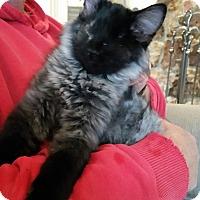 Adopt A Pet :: Stevie - Duncan, BC