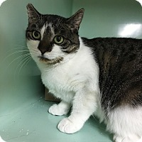 Adopt A Pet :: Beauty - Rockaway, NJ