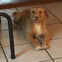 Adopt A Pet :: Scruffy - Lancaster, KY