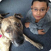 Adopt A Pet :: Muñeca - Manhasset, NY