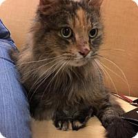 Adopt A Pet :: Ciri - Grand Ledge, MI