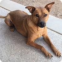 Adopt A Pet :: Francis - Tucson, AZ