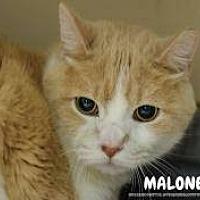 Adopt A Pet :: Malone - Hanna City, IL
