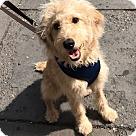Adopt A Pet :: Zoe Kravitz
