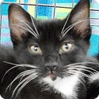 Adopt A Pet :: Gizmo - Castro Valley, CA