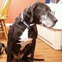 Adopt A Pet :: Joey - Logan, UT