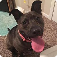Adopt A Pet :: Love Me Do - Mission, KS