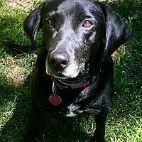 Adopt A Pet :: HALLIE IN MASSACHUSETTS - Brattleboro, VT