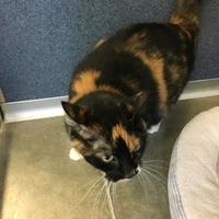Adopt A Pet :: Cassie - Fort Dodge, IA