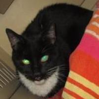 Adopt A Pet :: Boo - Columbiana, AL