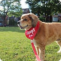 Adopt A Pet :: Tramp - Adoption Pending - Mississauga, ON