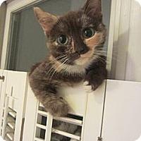 Adopt A Pet :: Reecie - Arlington, VA