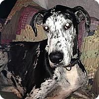 Adopt A Pet :: Stormy - York, PA