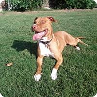 Adopt A Pet :: Sherri - Justin, TX