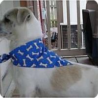Adopt A Pet :: Newsom - Glastonbury, CT