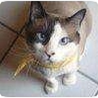 Adopt A Pet :: SKYLAR - Ft Lauderdale, FL
