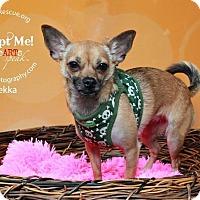 Adopt A Pet :: Bekka - Shawnee Mission, KS