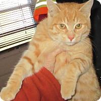 Adopt A Pet :: OrangeJuice - Leamington, ON