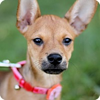 Adopt A Pet :: MYRTLE - San Antonio, TX