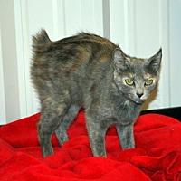 Adopt A Pet :: Molly - Pryor, OK