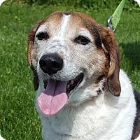 Adopt A Pet :: Charlie Chan - Grayslake, IL