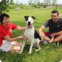 Adopt A Pet :: Peanut - Elyria, OH