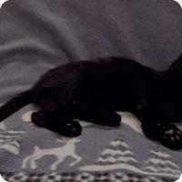 Adopt A Pet :: Deino - Sterling Heights, MI